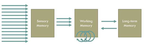 Many pieces of information enter sensory memory, but only a subset of those items transfer to working memory, and even fewer items actually make it to long-term memory.